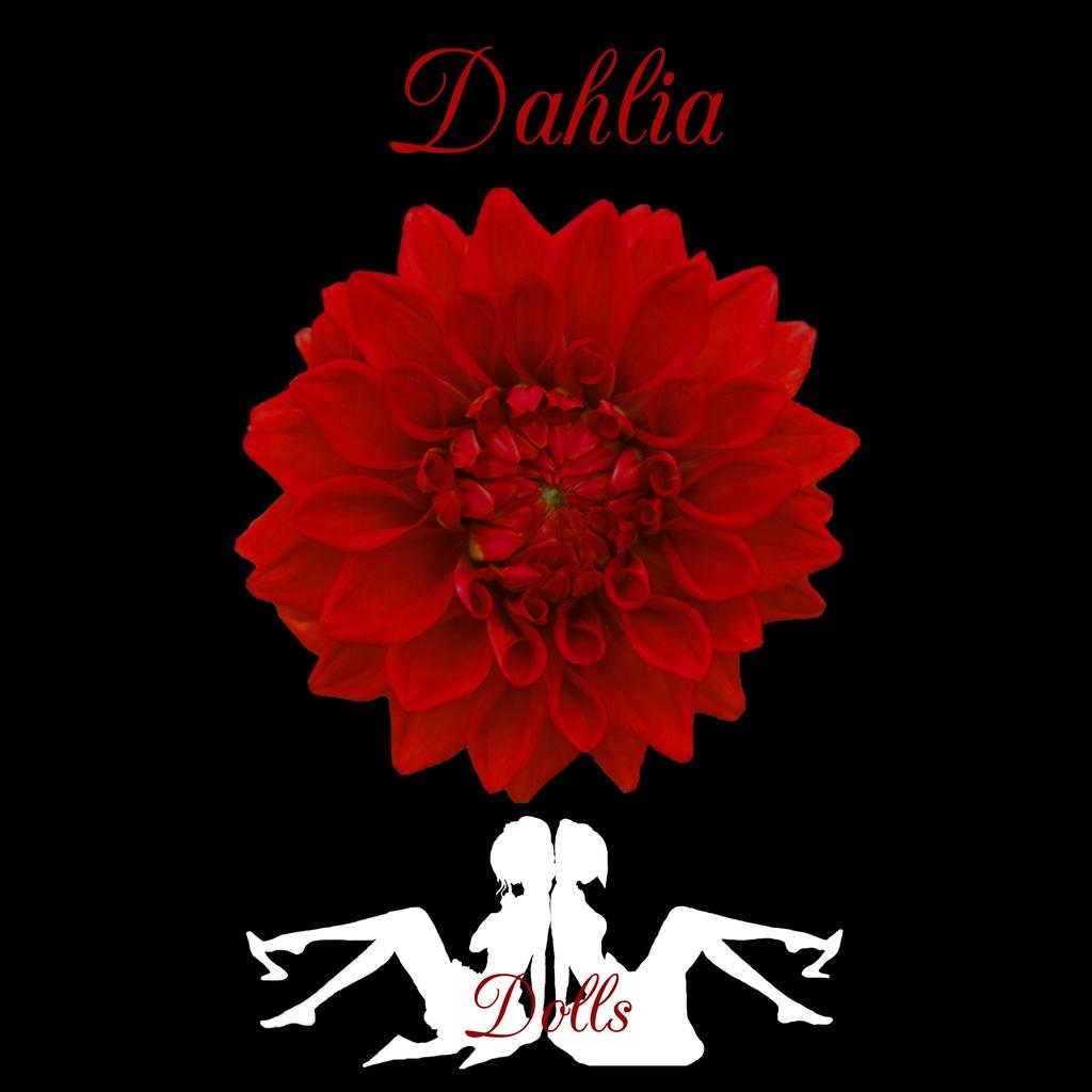 Dahlia / Dolls