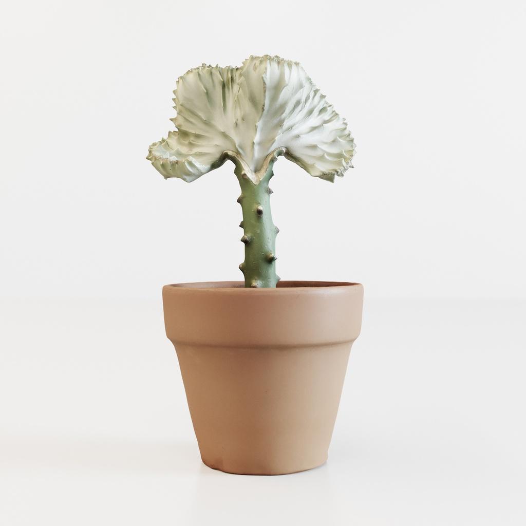 マハラジャ 【観葉植物3Dモデル】
