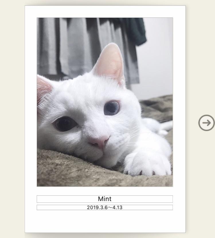 ミント 写真集 no.3