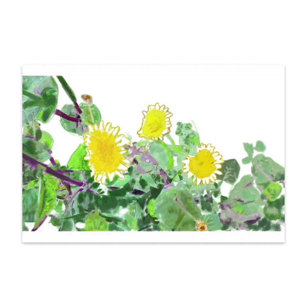野草 ノゲシのポストカード