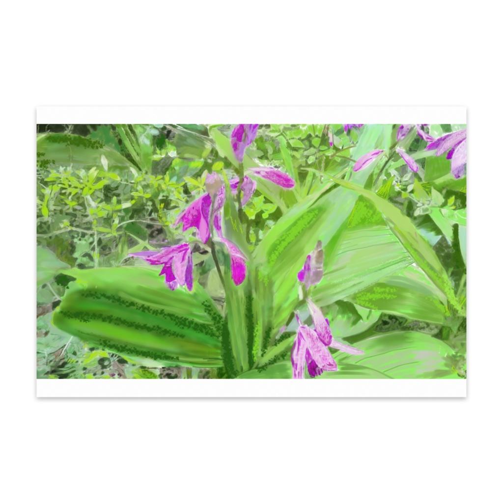 紫蘭のポストカード