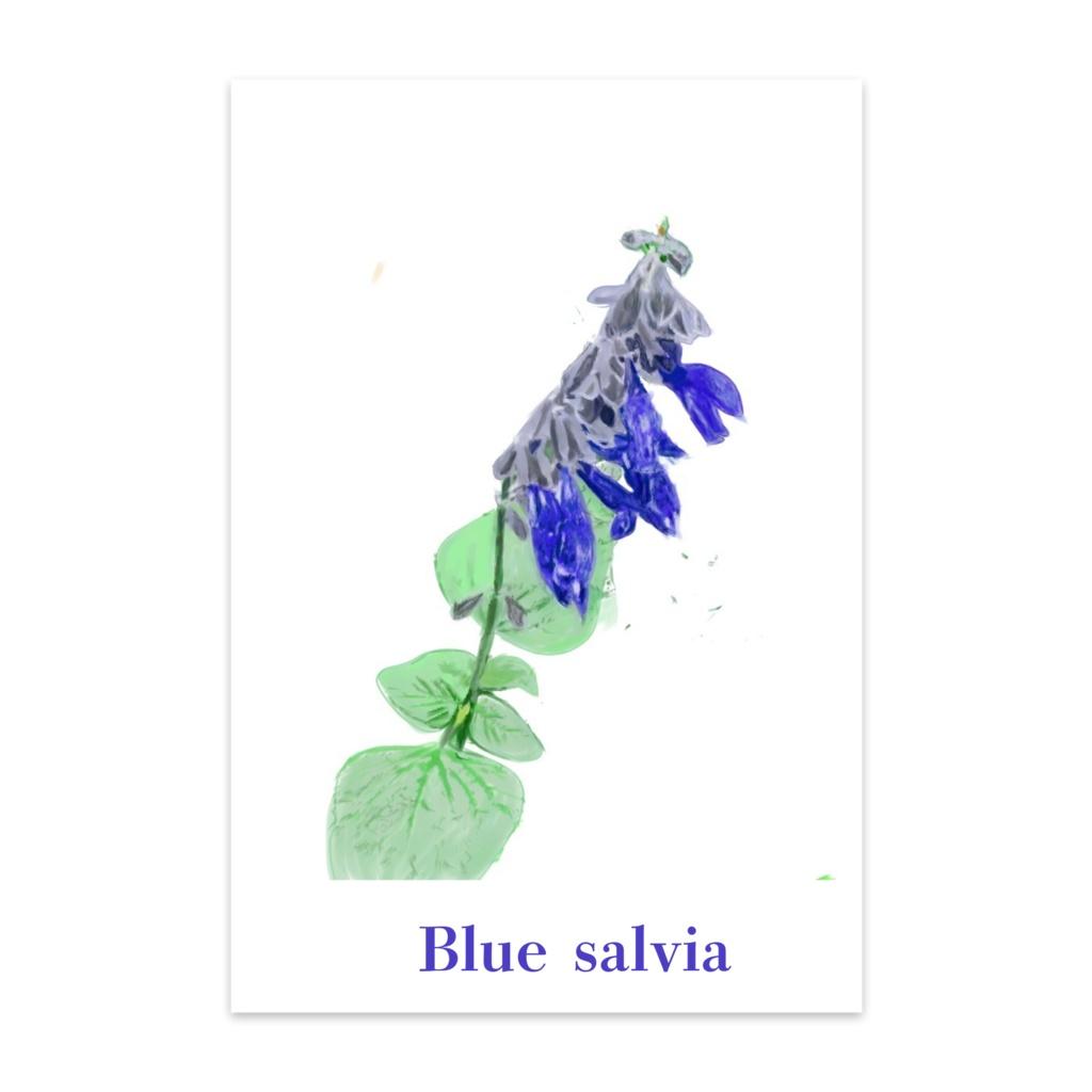 青いサルビアのポストカード