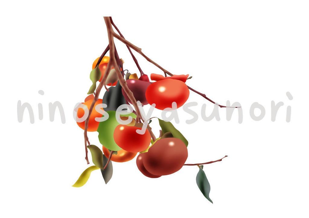 枝のついた柿のイラスト(png)