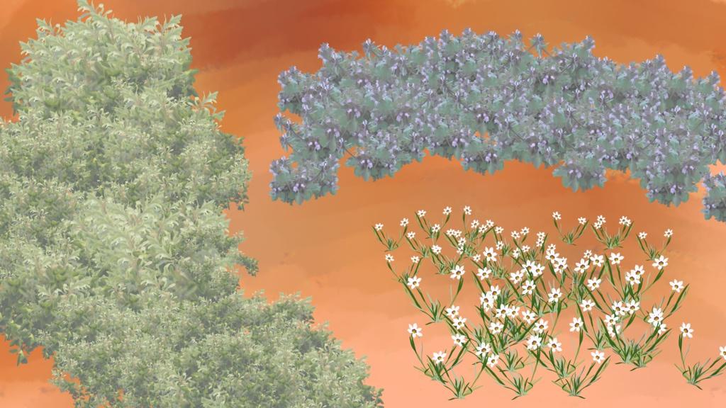 4~6月の雑草ブラシ