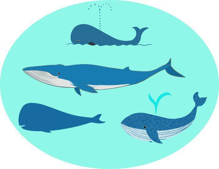 クジラのベクターイラスト素材 Chicodeza Pixiv Booth Booth
