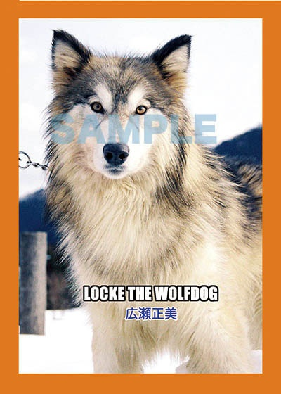 LOCKE THE WOLFDOG