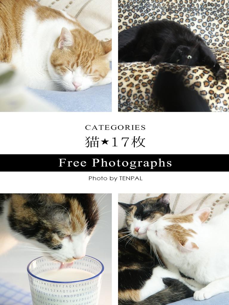 写真フリー素材(猫)17枚