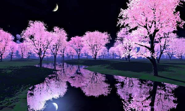 夜桜 No1
