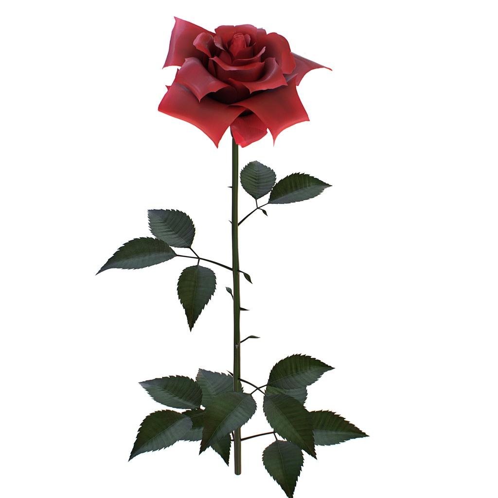 3Dモデル そこそこのバラ