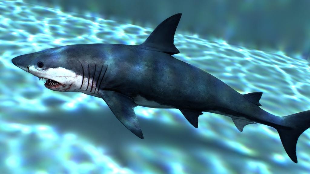 サメ の 脳みそ