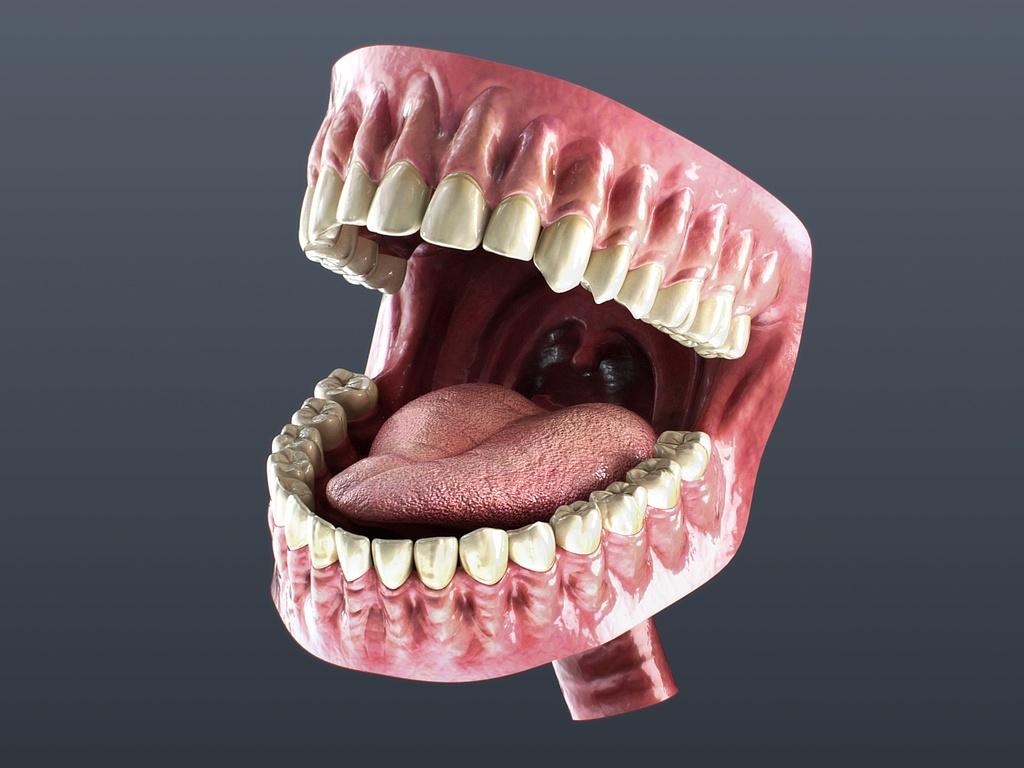 3D素材】口の中モデル - ショップByNEET - BOOTH