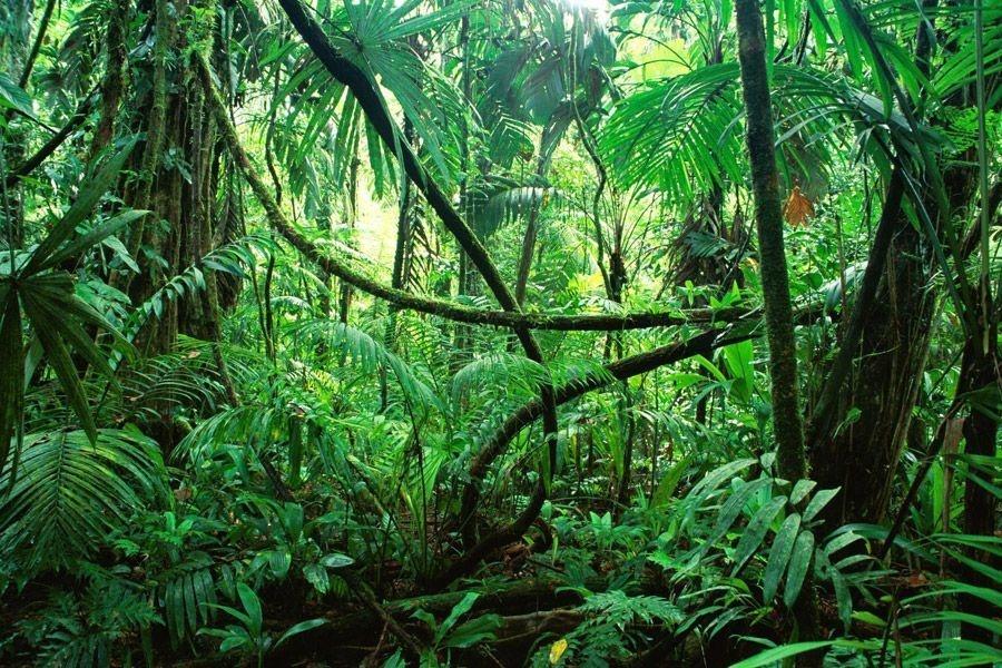 アカルム熱帯林