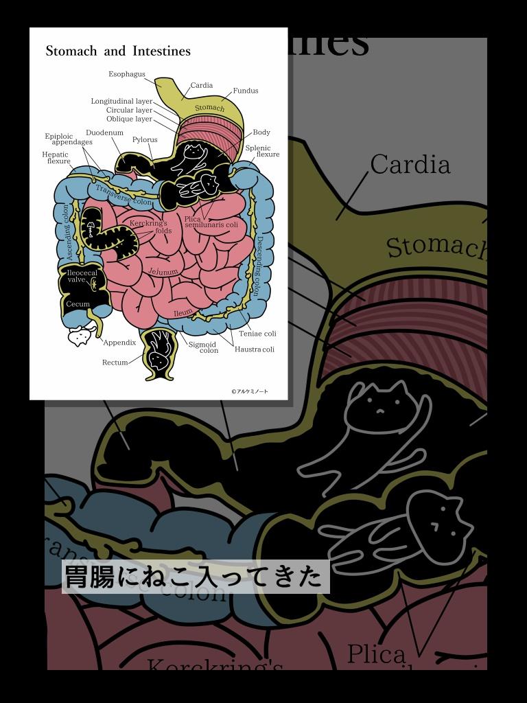 解剖学とねこポスカ