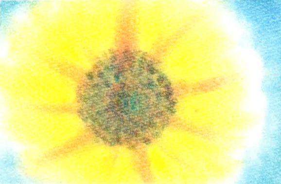 055太陽の花★★