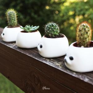 反抗期あざらしの植木鉢 Rebellious seal flower pot