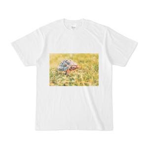 おさんぽリクガメのTシャツ(ホワイト)