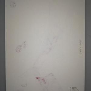 ポストカード原画【うさぎ、うさぎりんご】