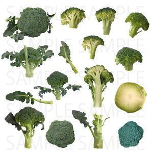 【画像素材】ブロッコリー【野菜】