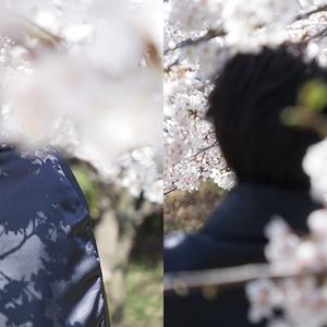 【文豪とアルケミスト】2.5/青空組と桜本/コスプレ写真集