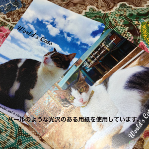 旅先で出会ったねこのポストカード(全7種)