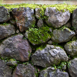 背景やテクスチャに使いやすい京都の夏の写真