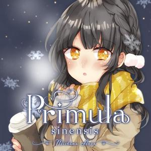 Primula -sinensis-