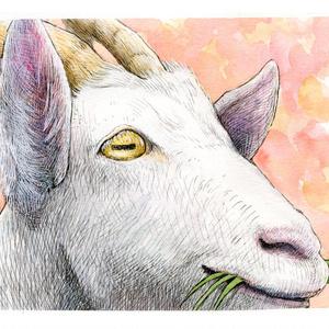 ヤギの瞳は横線(メイと牧場のどうぶつたちより)