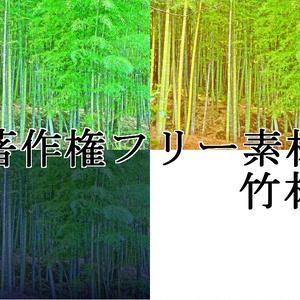 著作権フリー素材(竹林)