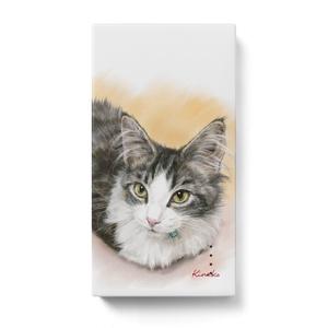 メインクーンの子猫 レグルスちゃん