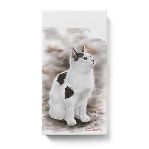野良猫 コッシー