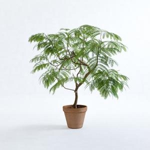 エバーフレッシュ1M【樹木・観葉植物3Dモデル】