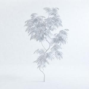 エバーフレッシュ2M【樹木・観葉植物3Dモデル】