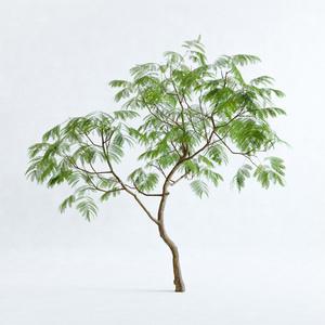 エバーフレッシュ3M【樹木・観葉植物3Dモデル】