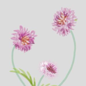 花。矢車草