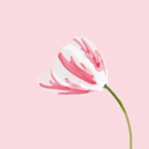 花。チューリップ