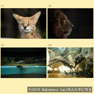 ポストカード(2019秋)