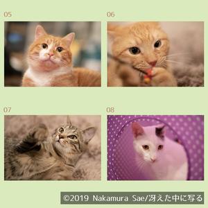 保護猫写真ポストカード