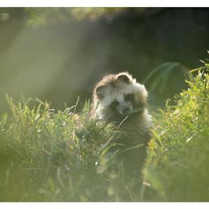 動物園写真ポストカード