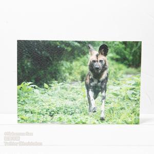 動物写真ポストカード
