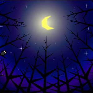 ポストカード004 森の月夜