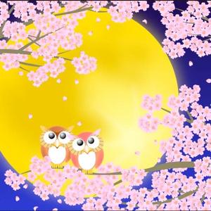 ポストカード008 静月桜(しずきさくら)