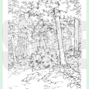 yl03_forest_01.zip