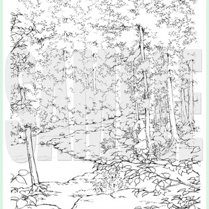 yl03_forest_02.zip