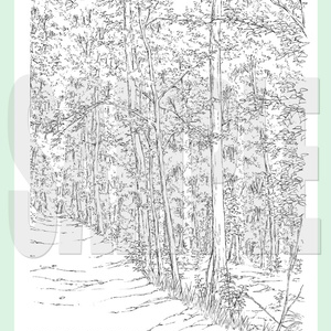 yl03_forest_04.zip