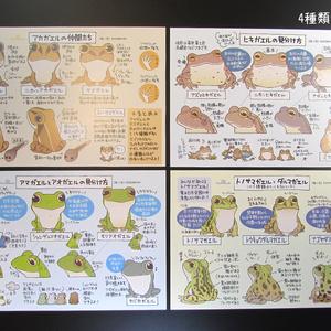 見分け方カードセット(旧名:図鑑ポストカードセット)