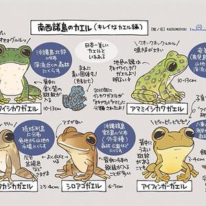 「カエルの見分け方の本」12ページ(修正済み)