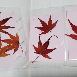 もみじ栞3枚セット②