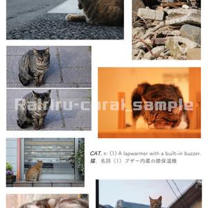 【自家通販】【写真作品】動物(小鳥/猫)2L版フォトカードセット(4枚組)