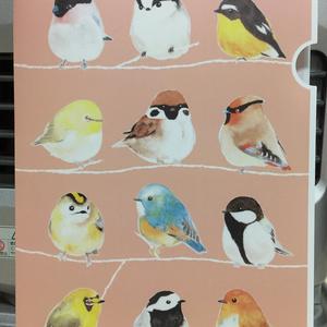 【クリアファイル】野鳥整列