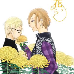 菊の花、ひらく